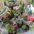 lima jenis tanaman hias