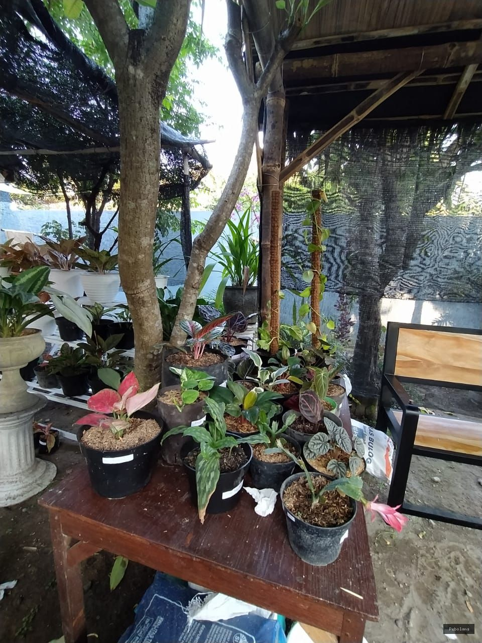 cara merawat tanaman hias tidak layu